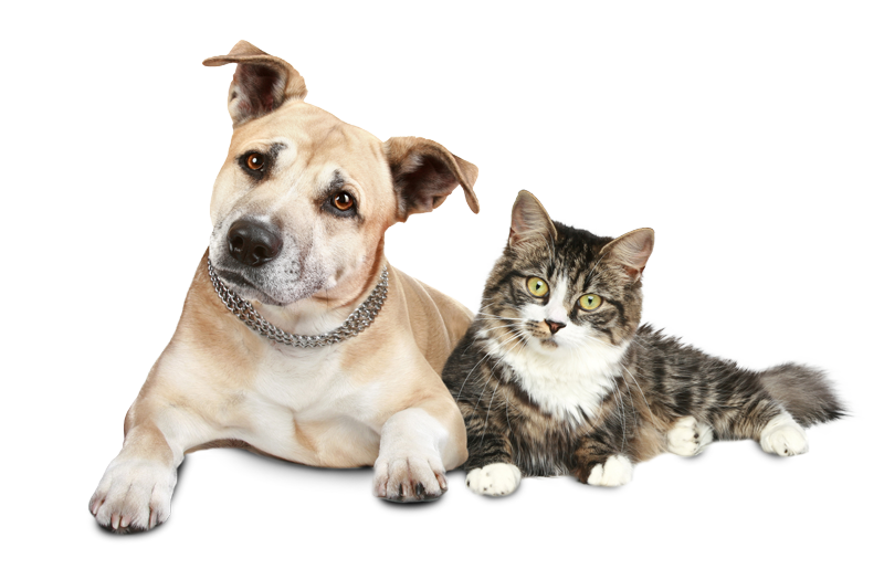 Dog-and-cat-cutout-2